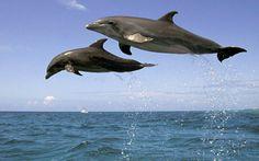 Δελφίνια έκαναν τη…βόλτα τους στην Πλαζ – Υπέροχο θέαμα - Σε απόσταση αναπνοής από τους λουόμενους