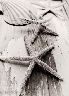 Starfish and Shell Beach Cottage Shabby Chic by mikesmithphoto, $12.00