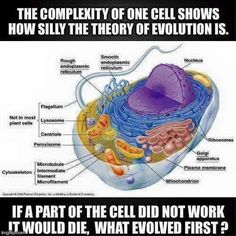 Not just Irreducible complexity is obvious here, but NOTHING smaller or simpler than a cell can live! This complex thing is the LEAST complicated life form.