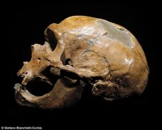The researchers said:'Our findings shed light on the disappearance of the Neanderthals, showing that endogenous factors such as relative culture level, rather than such extrinsic factors as epidemics...could have caused the eventual exclusion [of Neanderthals]' A Neanderthal skull is pictured above