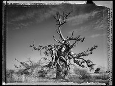 baobab, tree of generations Baobab Tree, Eyes, World, Gallery, Peace, The World