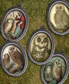 I love Owls...