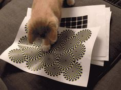 This cat who can't figure out why those goddamn things won't stop spinning.