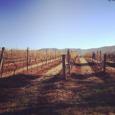 Scarborough wine co in the hunter valley