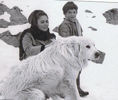 TV series I loved in the seventies - Belle and Sebastian.