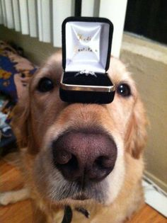 "One of the most original marriage proposals that I have ever seen.  ""Who's a good boy?"""
