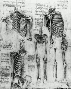 Anatomy - Da Vinci LOVE Da Vinci anatomical drawings!