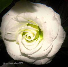 Bianco puro....