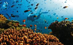 Discover the diverse marine life and vivid colours of the Great Barrier Reef. Sail the Whitsundays or seaplane over Heart Reef at this unique natural wonder. Great Barrier Reef, May Bay, Queensland Australia, Sea World, Marine Life, Places Around The World, Natural Wonders, Solo Travel, Under The Sea