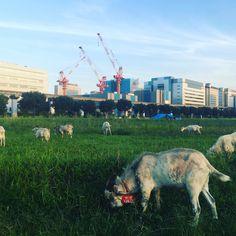 Crane feat.Goat