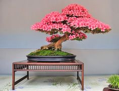 Bonsai Perfection.