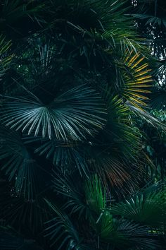 Abstract shot of tropical leaves in a rich lush green forest. Yoga Background, Greenery Background, Tropical Background, Photo Background Images, Flower Backgrounds, Photo Backgrounds, Wallpaper Backgrounds, Wallpapers, Pastel Wallpaper