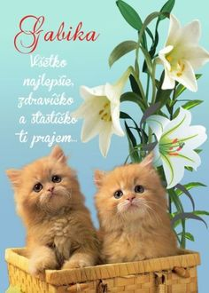 meninové priania Birthday Wishes, Cats, Animals, Quotes, Board, Wishes For Birthday, Gatos, Animales, Quotations