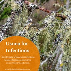 I love usnea. Usnea herb is used for fungal or staph infections, as well as strep and urinary tract infections. Healing Herbs, Holistic Healing, Medicinal Plants, Natural Healing, Natural Remedies For Uti, Herbal Remedies, Natural Medicine, Herbal Medicine, Herbs For Sleep