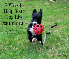 5 Ways to Help Your Dog Live a Natural Life from the Inside Out.