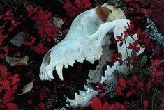Skull and roses aesthetic Persephone, The Ancient Magus, Chise Hatori, Skull Reference, Wolf Skull, Yennefer Of Vengerberg, Arte Horror, Necromancer, After Life