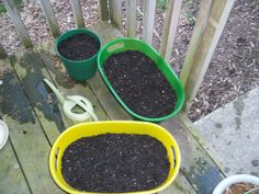 My carrots and lettuce are planted in party tubs. My radishes are planted in a plastic shoe box.