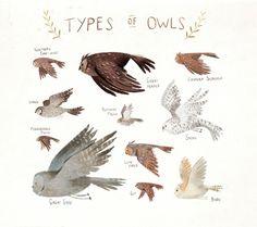 taryndraws: a squad of squawks