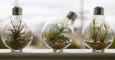 Para fazer terrários com lâmpadas você vai precisar de areia, uma mudinha que não precise de água, pinça e um pouco de paciência. (via @moveldemadeira) Clique e veja como utilizar lâmpadas na sua decoração!