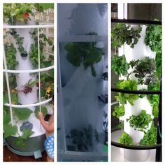 #diy indoor vegetable garden #fabulous indoor garden ideas #indoor garden decoration #indoor garden designs #indoor garden ideas #indoor garden ideas apartment #indoor garden pictures #indoor vegetable garden ideas #mini indoor garden kit