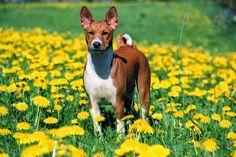 Co zrobić, jeśli psa użądli osa lub pszczoła?