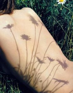 Shadow of daisies on implied nude in field with anonymous crop.