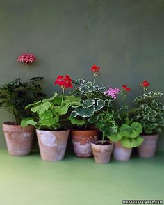 How to protect your plants from your pets