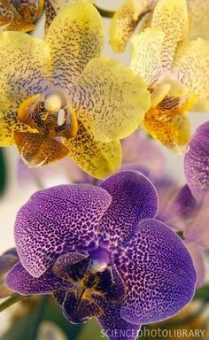 New Wonderful Photos: Yello and Purple Orchids