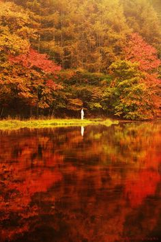 Autumn leaves in Chiba, Japan