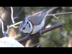 Wie zwitschert welcher Vogel - YouTube