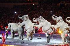 Our Trip to the Ringling Bros. Dragon Circus in Dallas