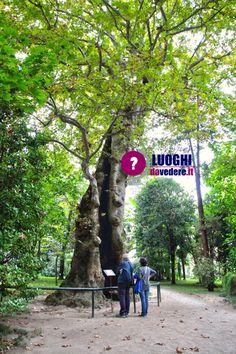 Itinerario per visitare Padova in 2 giorni o 1 weekend