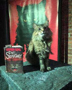 pet sematary stephen king movie horror cat cats scary adopted behind the scenes Pet Cemetery, Maine Coon Cats, Bored Panda, Horror Stories, Captain Marvel, Cat Breeds, Animal Shelter, Thriller, Kitty