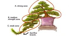 Liked on Pinterest: Especially with cascade bonsai which present unique challenges. The illustrations in this post are all from our Masters' Series Pine ...