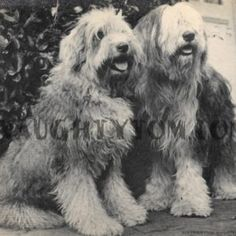 A vintage photograph of a pair of cute dogs $2.99  Available to buy at www.naughtytom.com