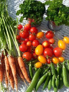Овощи с огорода в Норвегии🤗😍🍅🌱