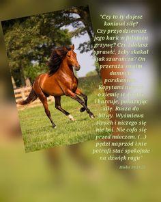Horses, Movie Posters, Animals, Animales, Animaux, Film Poster, Animal, Animais