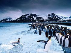 El mar espumeante lame los pies de una impresionante colonia de pingüinos rey, en período de reproducción, que se extiende hasta el horizonte. Fotografía tomada en la bahía de St. Andrew, Georgia del Sur, por Steve Bloom.