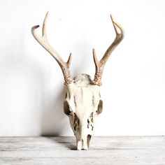 deer skull and antlers