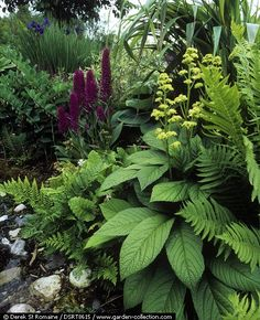 Tropical Shade Garden Annual Plants Tropical Shade G Modern Garden Design, Landscape Design, Back Gardens, Outdoor Gardens, Shade Garden Plants, Flowers Garden, House Plants, Woodland Garden, Garden Cottage