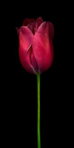 Flower Photography by Valentina