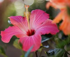 Hibiscus the theme flower, in honor of Nafa and Heather