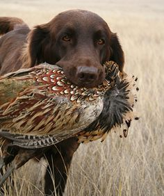 f2e69024f843b Hunting dogs are my favorite breed of dog. I love their grace, beauty,