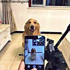 Chien sourit pour la caméra en tant que propriétaire prend sa photo