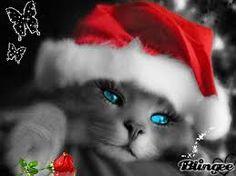 Resultado de imagem para gatos mais lindos do mundo