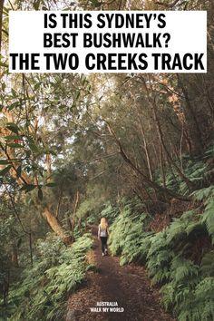The Two Creeks Track - one of the best bush walks in Sydney — Walk My World Perth, Brisbane, Beautiful Forest, The Beautiful Country, Visit Sydney, Sydney Trip, Cairns, Tasmania, Australia Travel