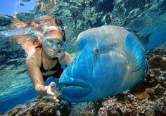Snorkeling-Great-Barrier-Reef-Australia