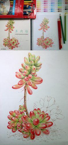 飞乐鸟寻找100个爱画画的伙伴 彩铅 花