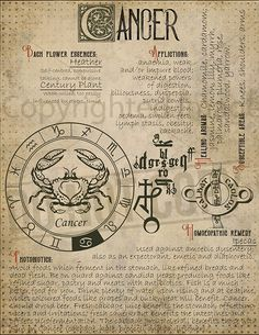 7 pages set about CANCER Astrological Sign Correspondences. They are an ideal addition to your own Wicca Book of Shadows. Wiccan Spell Book, Wiccan Spells, Witchcraft, Pagan, Magick, Magic Herbs, Herbal Magic, Grimoire Book, Astrology Zodiac