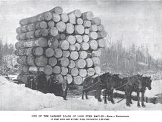 Logging's roots in America stretch back to the early 1600s. Ever since the arrival of settlers in Jamestown in 1607, lumber has been essential to the North American economy. Today, the logging trad…